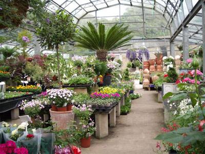Купить цветы и рассаду заказать подарок на 8 марта девушке